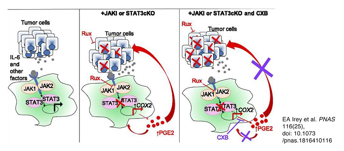 graphical rendering of JAK/STAT inhibitors affecting tumor cells