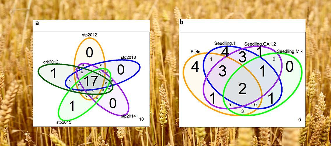 Venn diagrams of QTLs