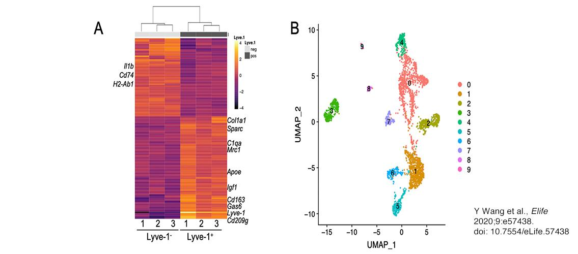 macrophage graphics generated by transcriptional profiling
