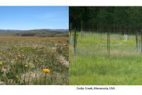 photos of NutNet sites in Bogong, Australia and Cedar Creek, Minnesota, USA