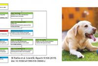 diagram of pipeline for identifying fusion genes; photo of yellow lab with a small blue ball