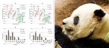 graphs of genomic inbreeding coefficients; picture of giant panda